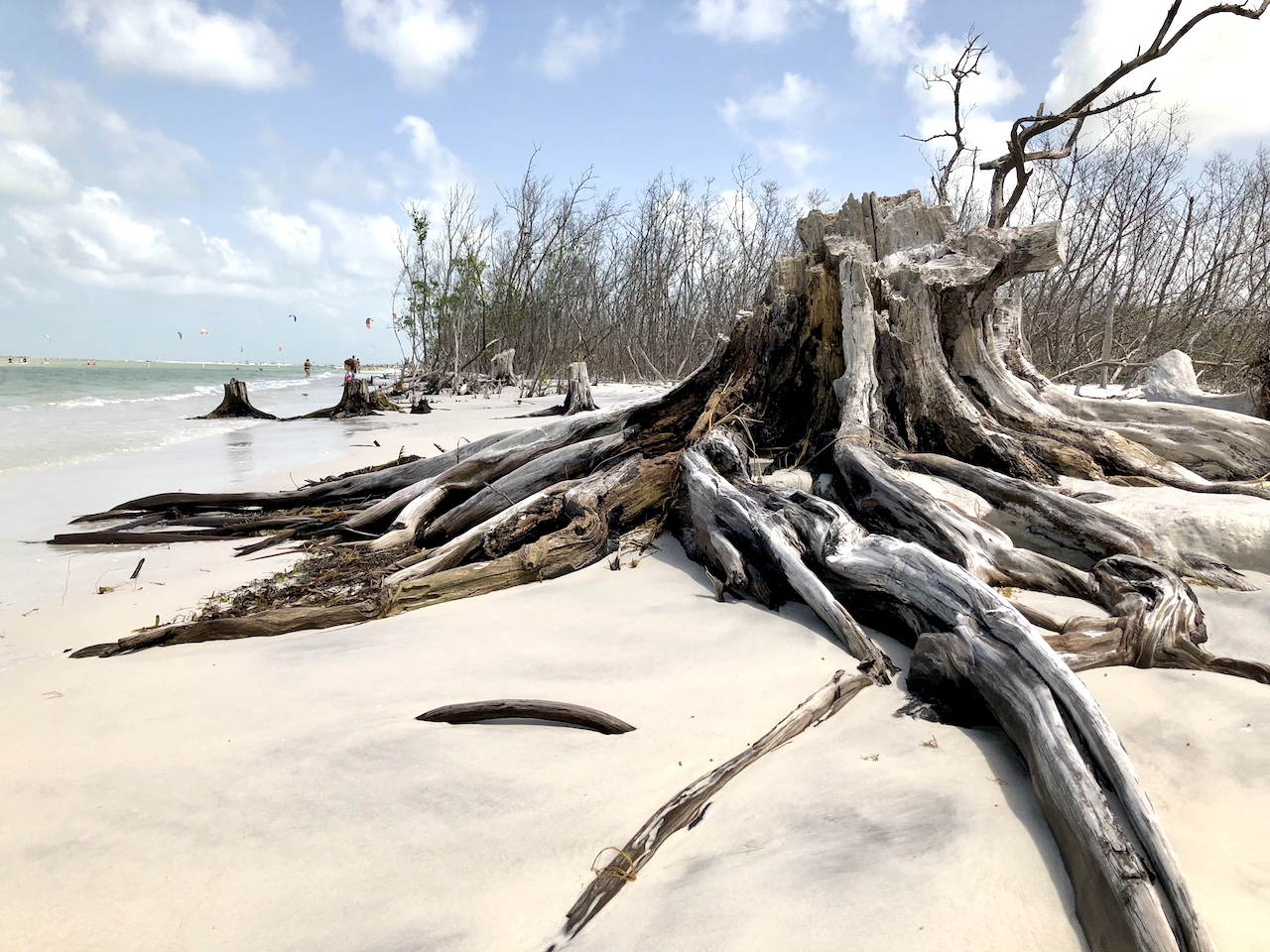 The nature is everywhere at Fort de Soto park, all the way to the beach itself